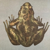 Animàlium  #amfibis #granotes  #benvingutsalmuseu