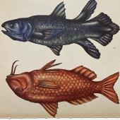 ANIMÀLIUM  #peixos